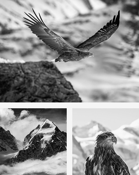 An eagle taking flight on top, an alpine peak with a few clouds in the lower left and an close-up view of an eagle with the Alps in the background in the lower right.